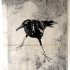 Baie Crow.  Linoprints.birds