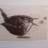 Wren on washi paper with music notes