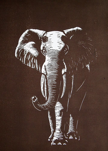 Elephant in Umber